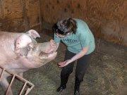 veganlisa-piggy
