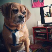 erica-doggy2ed