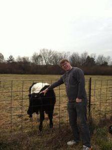 jacob-cow